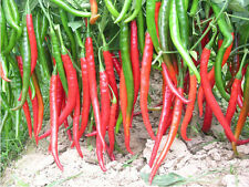 30 Seeds Of Each Pack Long Red Pepper Seeds Vegetable Seed Spicy C011 Hot
