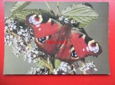 POSTCARD ANIMALS BUTTERFLY - PEACOCK