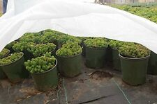 DCP19-.55oz 7'x10' Floating Row Crop Cover / Frost Blanket / Garden Fabric Cover