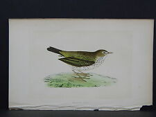 Rev. F. O. Morris, Birds, S4#30 Meadow Pipit