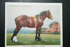 Clydesdale Draught Horse   Vintage Colour Card  ## VGC