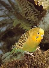 Bird Vogel Wellensittich Foto: Schmidecker