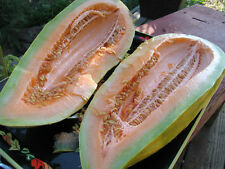 melon, BANANA MELON, rare HEIRLOOM, 25 seeds! GroCo