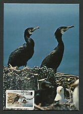 ISLE OF MAN MK VÖGEL KORMORAN BIRDS MAXIMUMKARTE CARTE MAXIMUM CARD MC CM c9295