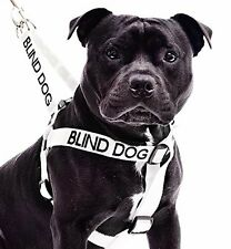 Strap Harness Color Coded BLIND DOG Non Pull Embroidered Awareness Large L-XL