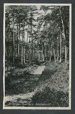 Groeten uit Driebergen-Rysenburg  Boschgezicht