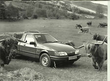 Ford Sierra Pick Up P100 Truck & Highland Cattle Photograph