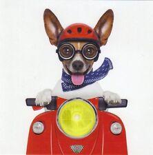Klappkarte de luxe: Jack Russel - Terrier Chico als Easy Rider mit Moped