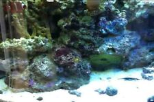 10KG LIVE SAND FOR MARINE CORAL REEF FISH TANK AQUARIUM MATURED OVER 2 YEARS!