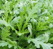 Salad - Chopsuey Greens - 5000 Seeds - Large