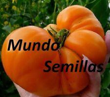 TOMATE CORAZON  BUEY NARANJA  GIGANTE   50  Semillas Seeds
