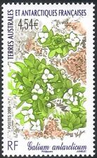 "FSAT/TAAF 2008 ""Galium antarcticum""/Flowers/Plants/Nature/Animated 1v (n30225)"