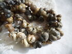 AUSTRALIAN ARNHEM LAND SEA SNAIL NERITE SHELL 95 cm ABORIGINAL NECKLACE
