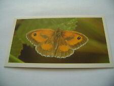 Grandee British Butterflies Card No  4 Gatekeeper Or Hedge Brown