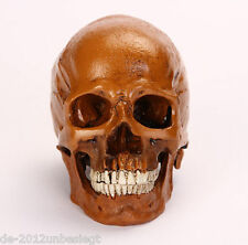 NEW 1:1 Human Anatomical Anatomy Head Skeleton Skull Teaching Model Precise