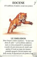 saber toothed tiger tigre dents  sabre PREHISTORY ANIMAL CARD CARTE A JOUER