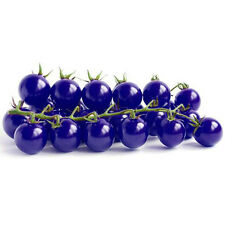 Top Quality 30 Seeds Purple Cherry Tomato Organic Heirloom Fruit Vegetable Plant