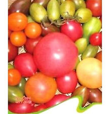 FD2498 Mix Color Tomato Seed Green Yellow Red ETC.Vegetable Seed  20 seed✿