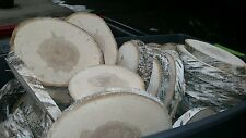 """16 Pc 10"""" to12 Birch Log oval Slices Wood Disk Rustic Wedding Centerpiece Coast"""