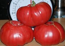 RED Brandywine HEIRLOOM TOMATO (50 Seeds) Great For Sandwiches, salads,Slicing