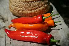 Pepper Seeds - SWEET TWISTER -  Long Sweet Peppers - Mild Taste - 10 Seeds
