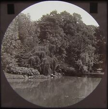 Glass Magic Lantern Slide BONCHURCH POND C1890 ISLE OF WIGHT PHOTO IOW