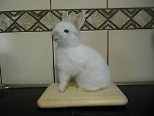 Taxidermy  Art Rabbit cute  animal Home ware Bar ware Weird Stuff Skull