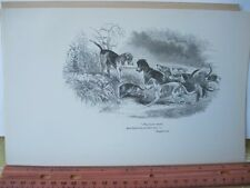 Vintage Print,THEY HOVER ROUND,Noble Science,Fox Hunting,William Blew,1893