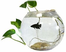 Indoor Table Top Live Water Garden Fish Bowl- Grow Plants, Beta Tank, MFL-FISH