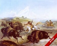 NATIVE AMERICAN INDIANS HUNTING BISON BUFFALO ON HORSE 8X10 CANVASART PRINT