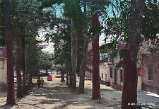 """# SANTU LUSSURGIU: S. LEONARDO """"DE SIETE FUENTES""""  1966"""