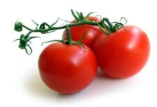 Sweet Campari Tomato, 50+ Fresh 2015 Seeds with FREE  SHIPPING
