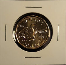 2008 $1 DOLLAR OLYMPIC LUCKY LOON / LOONIE FROM MINT ROLL UNCIRCULATED