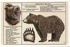 Grizzly Bear, Information Diet Body Paw etc. -- Modern Technical Animal Postcard