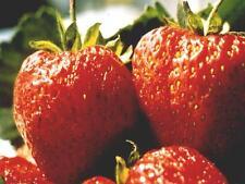 ***Erdbeere, Parfümöl, 30ml, frisch, fruchtig!! Topp!!