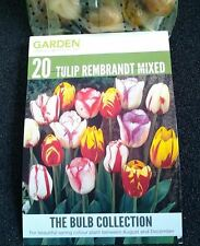 40 Tulip Bulbs Rembrandt Mix Stunning Easy to grow Spring Flowers Limited Stock
