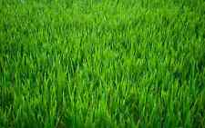 Green Grass Background Edible Wafer Paper FULL A4 SHEET