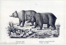 Bären - Bär - Lithographie um 1835