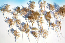 Super Realistic model Trees bush armatures ideal for all O OO HO N scale scenery