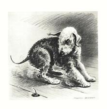 Bedlington Terrier - Morgan Dennis Dog Print - Matted