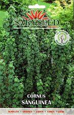 10 Semi/Seeds CORNUS SANGUINEA