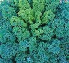 Kale- Blue Curled- 100 Seeds - 50 % off sale