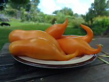 Buratino - a uniquely shaped tomato with intense color and flavor