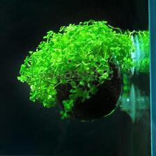 Aquarium Fish Tank Glass Aquatic Live Plant Cup Pot Crystal Red Shrimp Holder