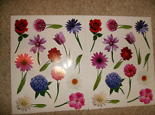 24 PC MULTI  FLOWERS Blooming WALL Decals NEW IN PACKAGE! Stickers VINYL