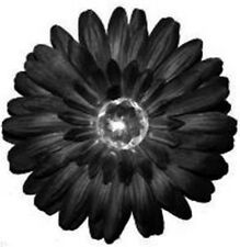 5 Wholesale Black Flower Crystal Hair Bow Clip *US Seller* Top Dance Party