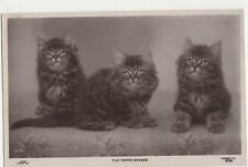 Cats, The Three Graces, 1906 Rapid Photo RP Postcard, B371