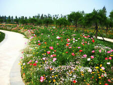 Perennial Wildflowers Mix Seed 200 Seeds Beautiful Colorful Garden Seed Hot K002