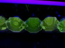 Antique VASELINE URANIUM FLUORESCE Glass Door Knobs RARE!!....Not Really!
