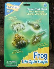 plastic FROG LIFECYCLE topic learning resource spawn tadpole froglet and frog